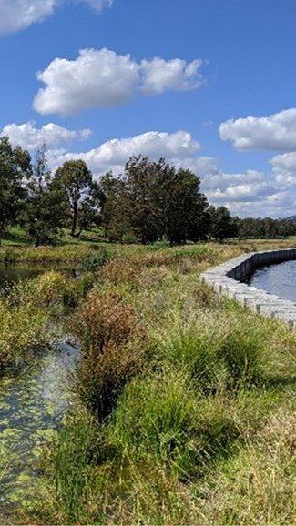 Isabella Pond Wetlands Jamie Dawson_crop